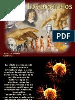 Los organelos - Consulta.pps