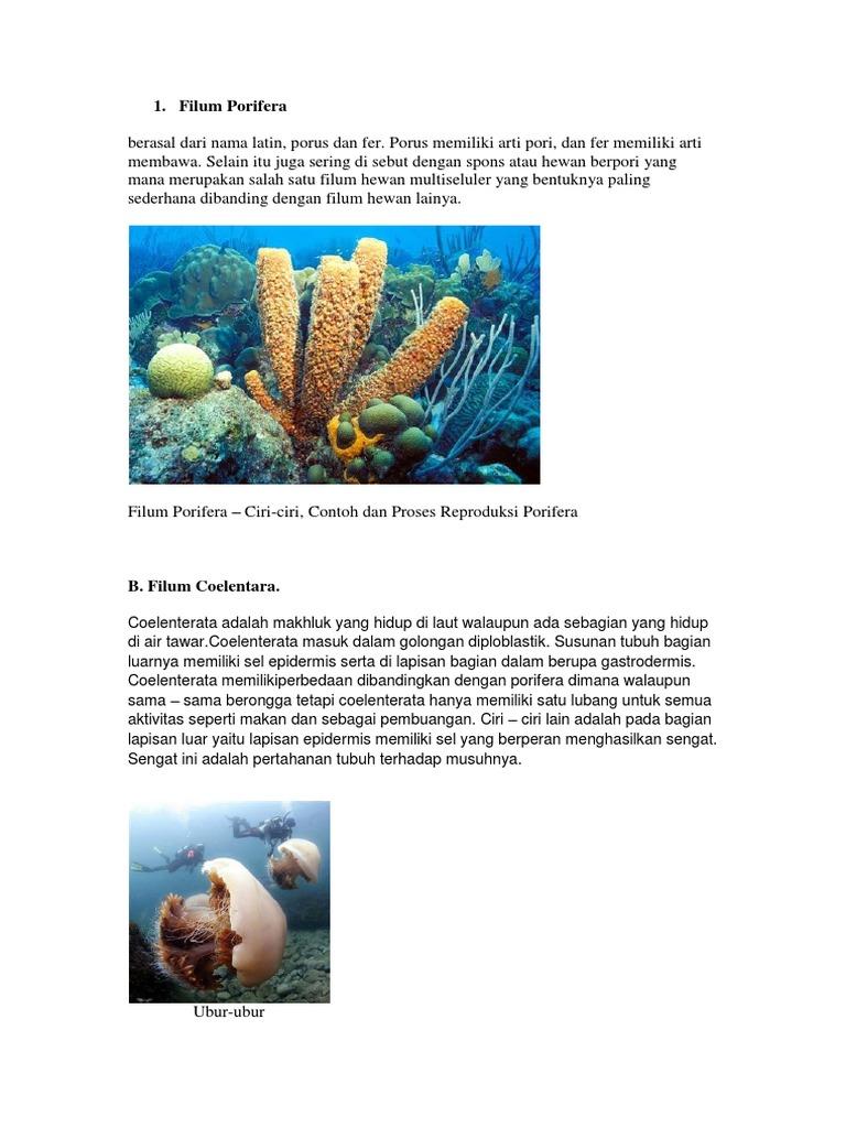 65 Contoh Dan Gambar Hewan Porifera HD Terbaru
