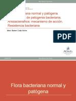 02. Flora. Patogenia-ATB-RB-2016.pptx