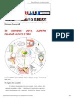 Sistema Sensorial _ Anatomia Humana