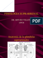 FISIOLOGIA SUPRARRENAL.ppt