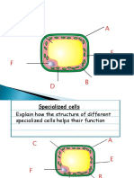 Specialized Cells and Funtion