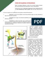 La nutrición de las plantas - Primer grado.docx
