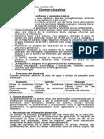 GLOMERULOPATIAS.doc