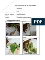 deskripsi tumbuhan.docx