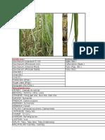 2beingfit.com Sugarcane Benefits Uses