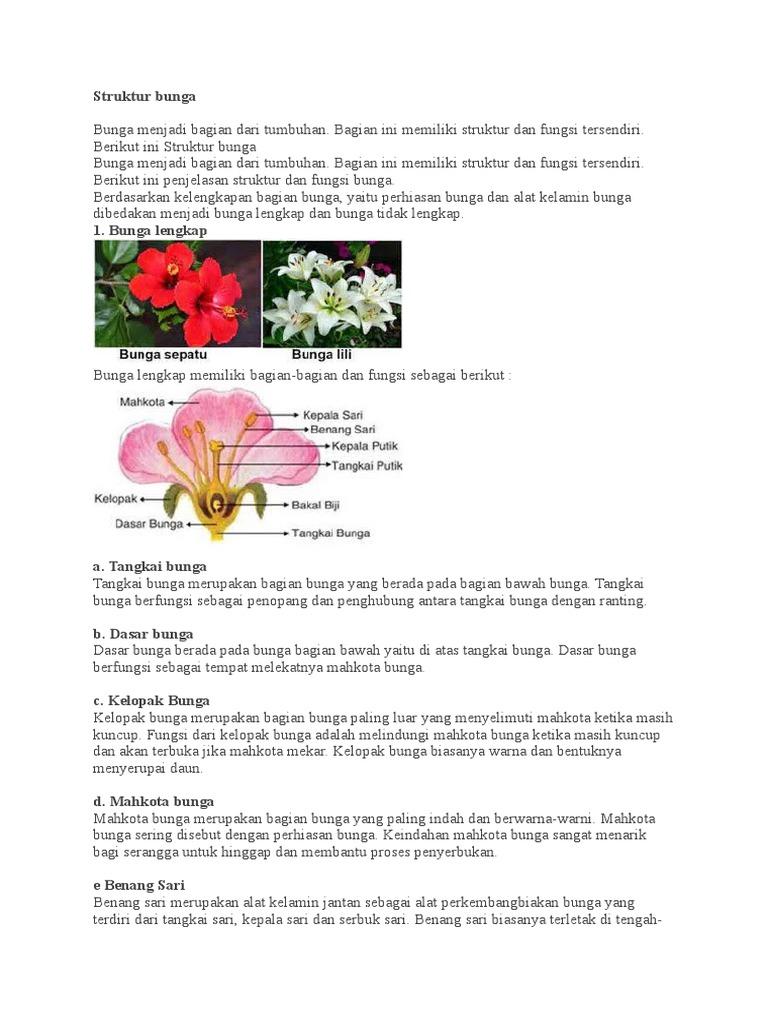 Gambar Bagian Bagian Bunga Sepatu Dan Cara Penyerbukannya Berbagai Bagian Penting