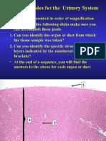 Urinary Histology Slides.ppt