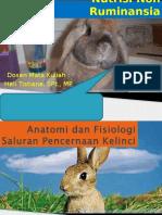nnr-kelinci