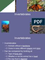 Invertebrates New2