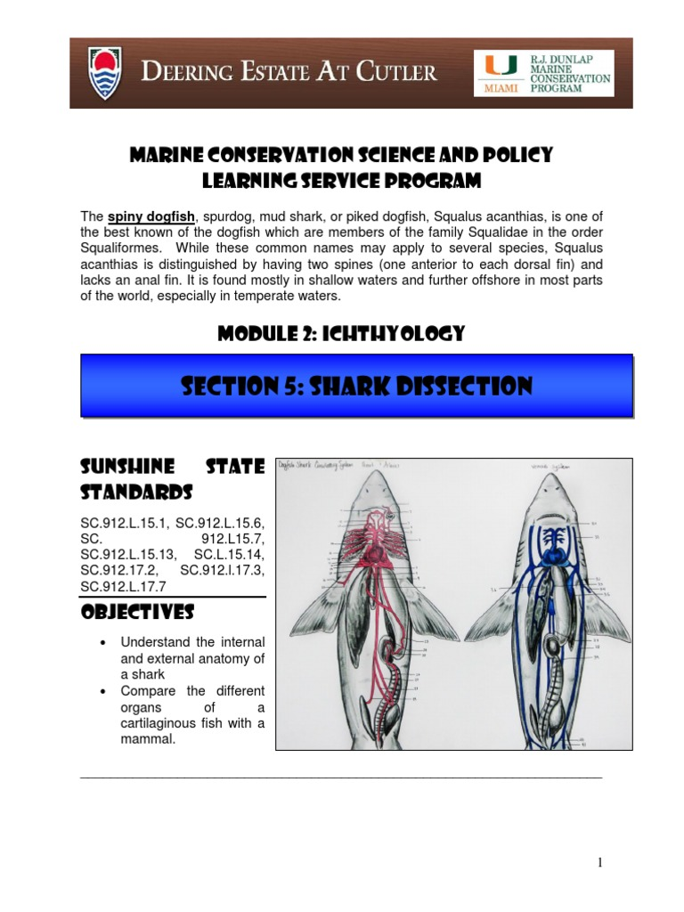 MODULE 2 Ichthyology - SECTION 5 Shark Anatomy and Dogfish ...