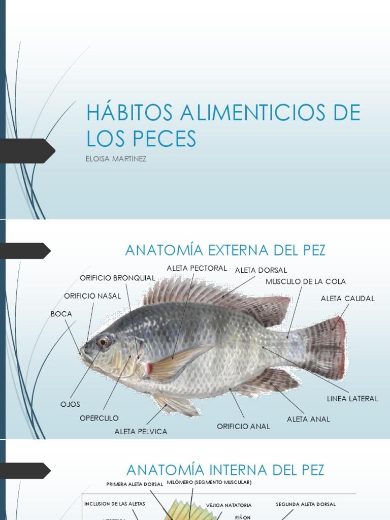 Vistoso Cray Anatomía De Los Peces Galería - Anatomía de Las ...