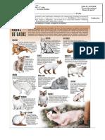 Texto Discontinuo Raza de Gatos