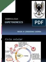 Gametogenesis.pptx