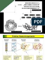 Proteinas_1_IA_2017