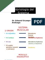 14 Muscular.pptx