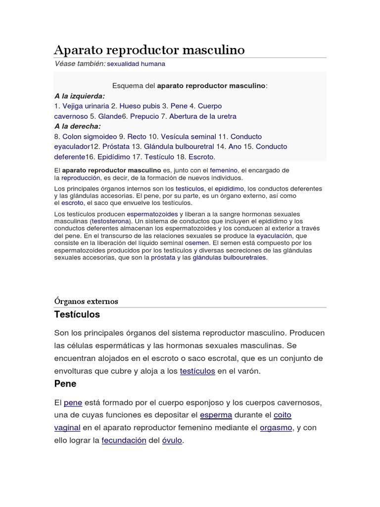 Moderno Cuerpo Femenino Diagrama De órganos Internos Foto - Imágenes ...