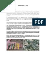 Enfermedades comunes del Olivo 2017 w.docx