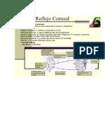 reflejos cornal y fotomotor1.docx