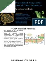 EXposición-MICROBIOLOGIA