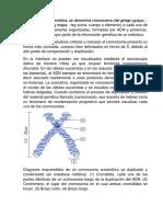 En Biología y Citogenética
