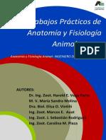 Trabajos Pr Cticos Anatom a 2015