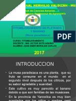 Exposicion Eber Platano
