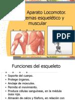 5B Relacion Osea y Muscular