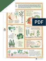 verduras material de apoyo 5°