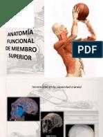 Anatomía de Hombro y región axilar.pdf