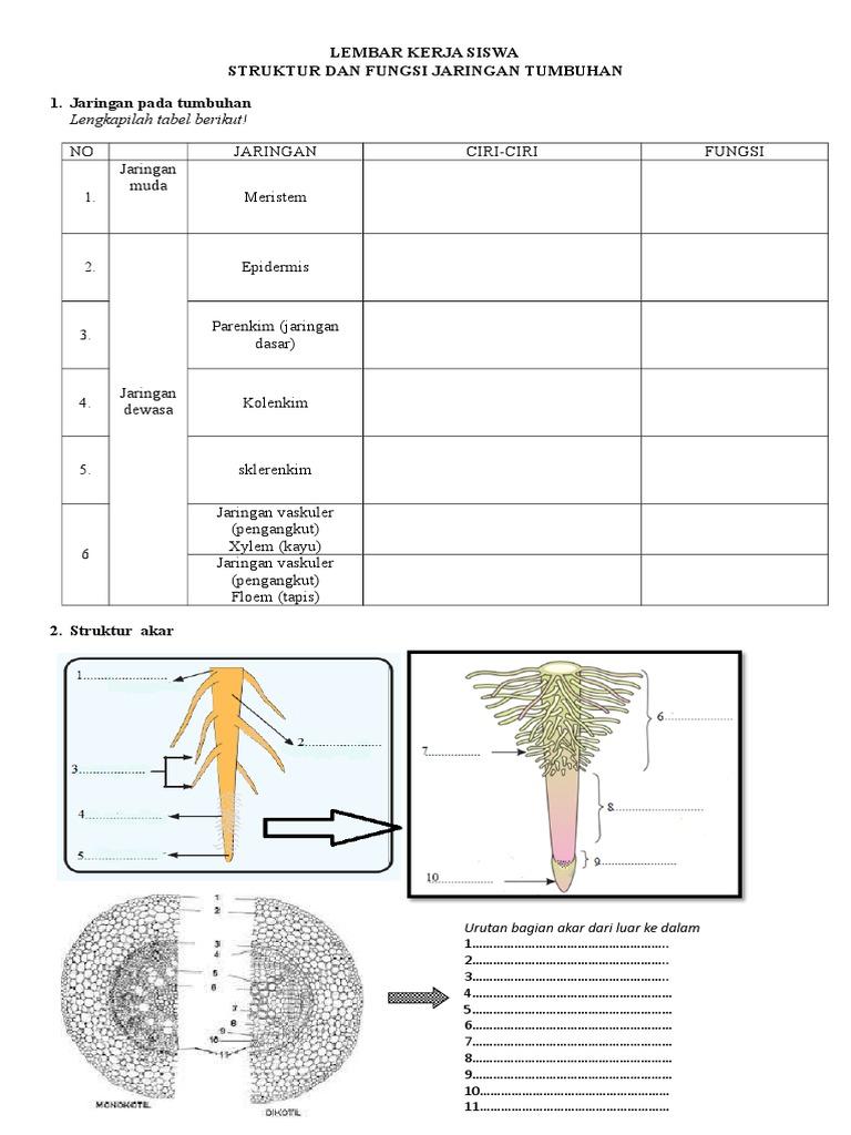 328627578 lembar kerja siswa struktur jaringan tumbuhanc ccuart Images