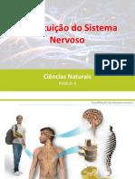 Constituição Do Sistema Nervoso