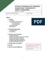 Tema 3. Estructura y función de los tendones