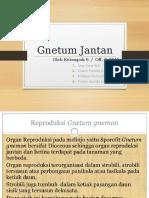 gnetum