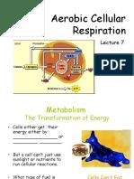 Aerobic Respiration Power Point