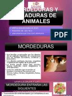 MORDEDURAS Y PICADURAS DE ANIMALES.pptx