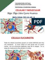 A Celular y Molecular v 2015 Ceucar.pdf