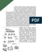 Autofagia Info