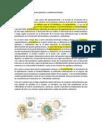 Placentacion y Parto