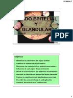 Epitelial y Glandular