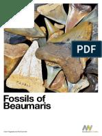 Fossils of Beaumaris Feb 2015
