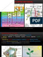 Reino Plantae (Botánica)