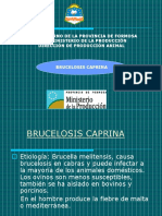 Brucelosis Power Cabras