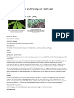 Cassava Brown Leaf Spot 095