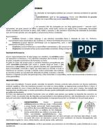 Gimnospermas e Angiospermas
