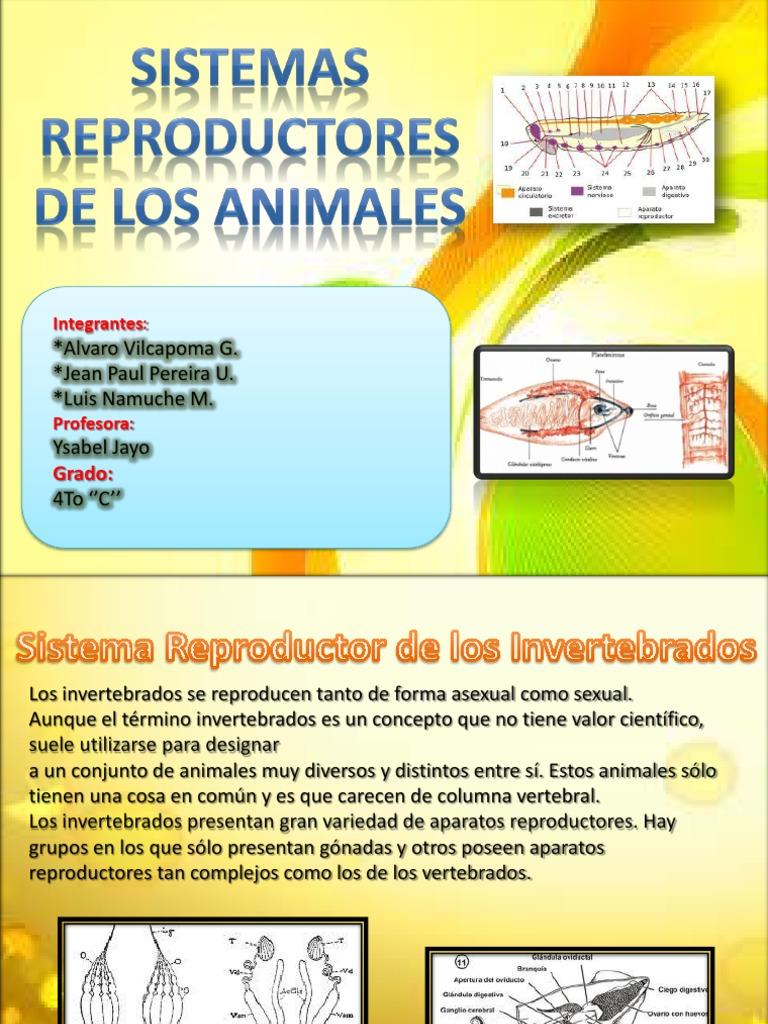 Sistema Reproductor Animales