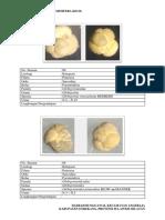 Deskripsi Foraminifera Kecil