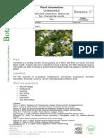 Chamomile Flower Bio Extract