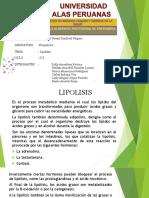 EXPOSICION LIPOLISIS