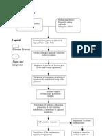 acute glomrulonephritis pathophysiology